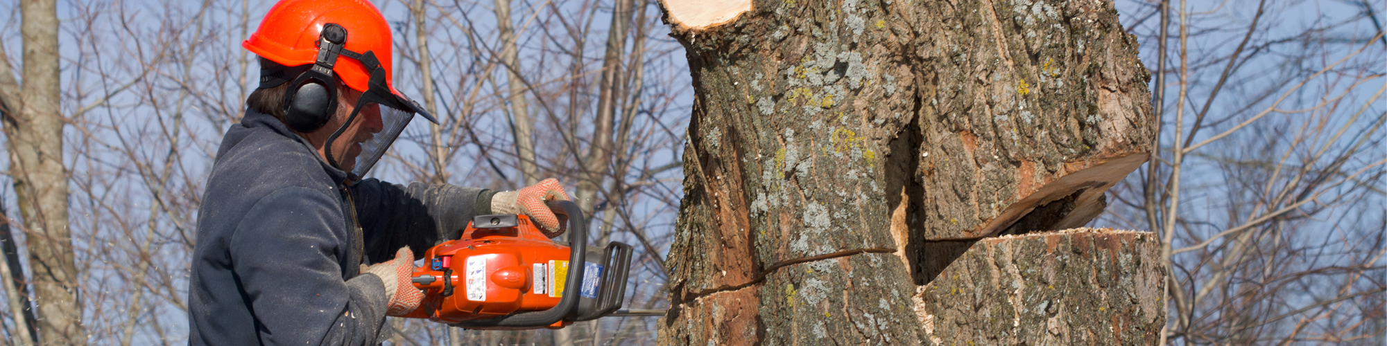 Tree Removal Services in Berlin, CT