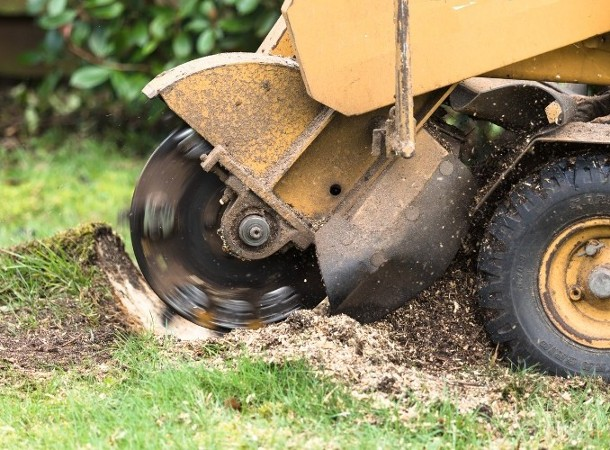 Stump Grinding in Berlin, CT